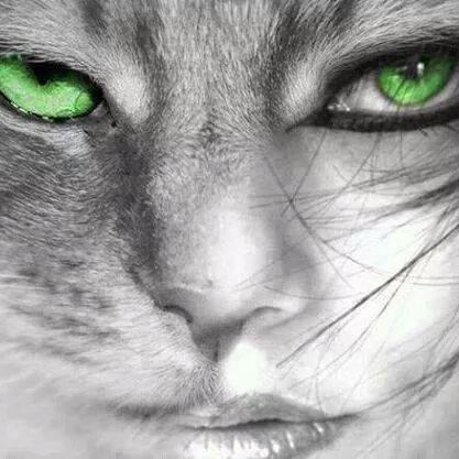 macska-lány