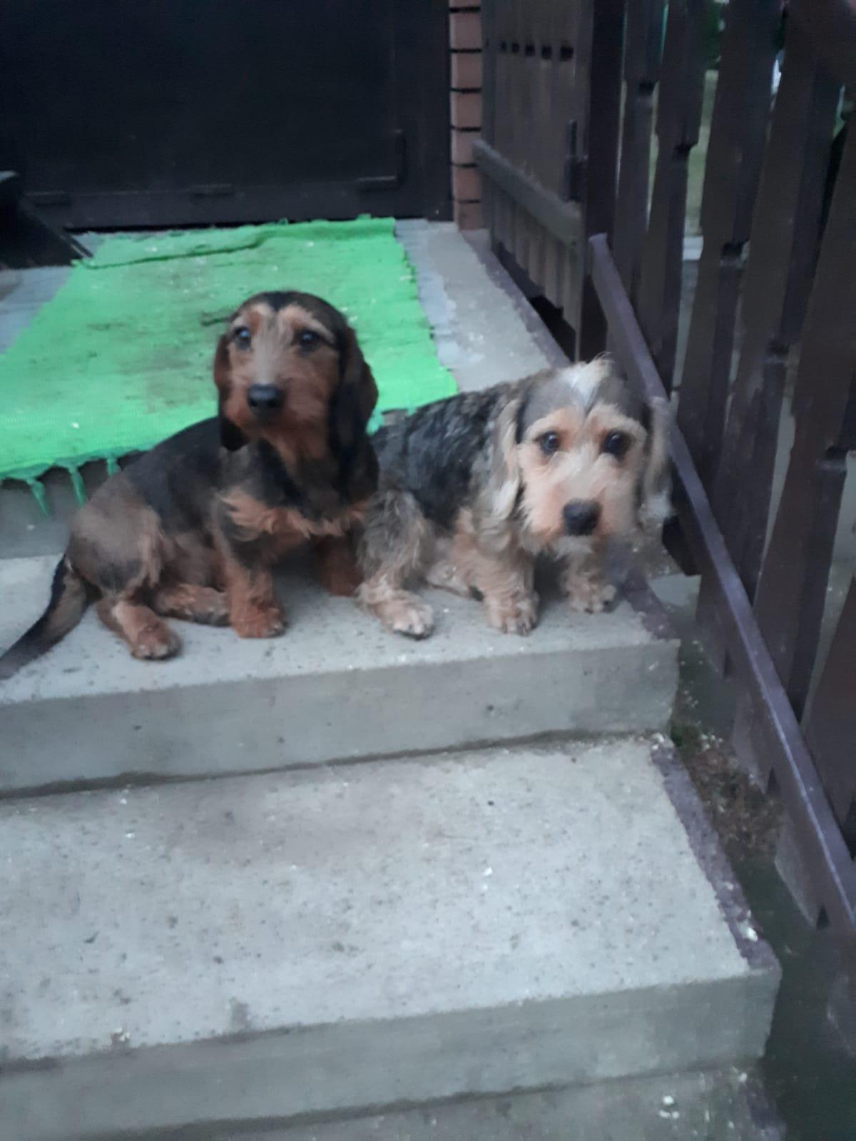 Simonék félrebeszélnek (74.) Pince foglyai a két kis kutya